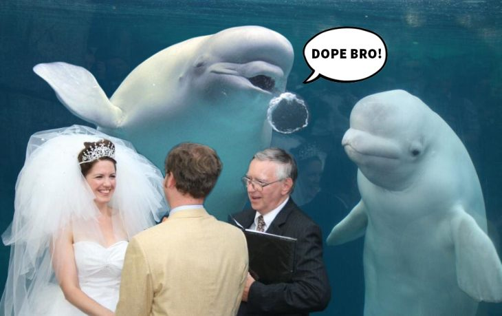 ballena beluga dope