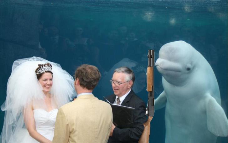 ballena beluga shotgun