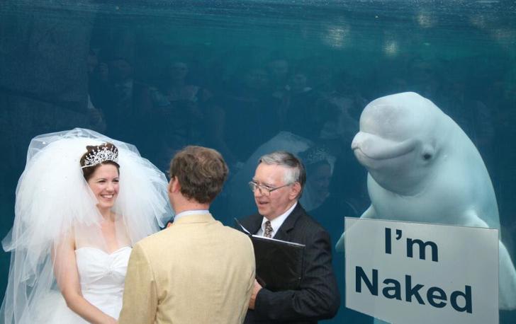 naked ballena