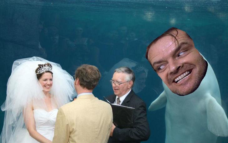 ballena beluga johhny