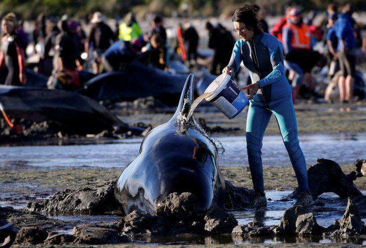 Ayudando a una ballena