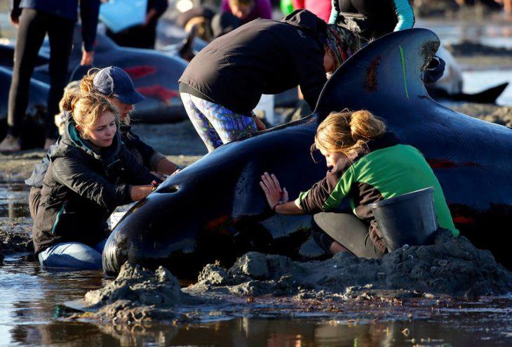 Niñas ayudando a ballena