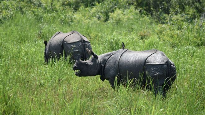 Rinocerontes en un parque protegido