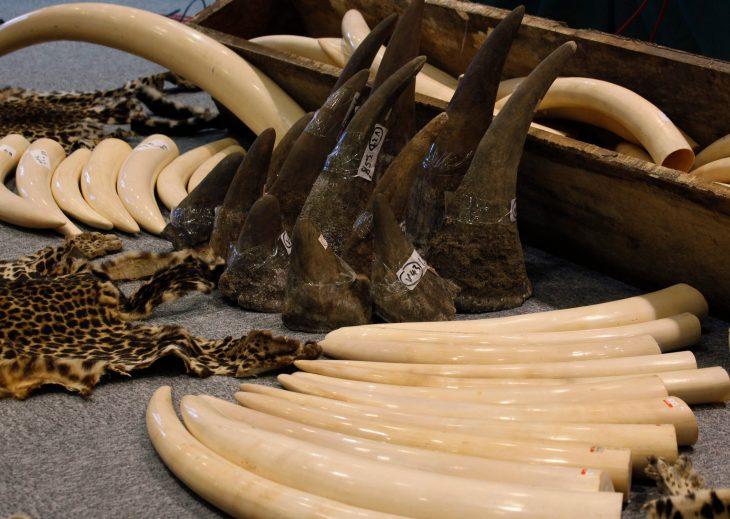 tigres huesos