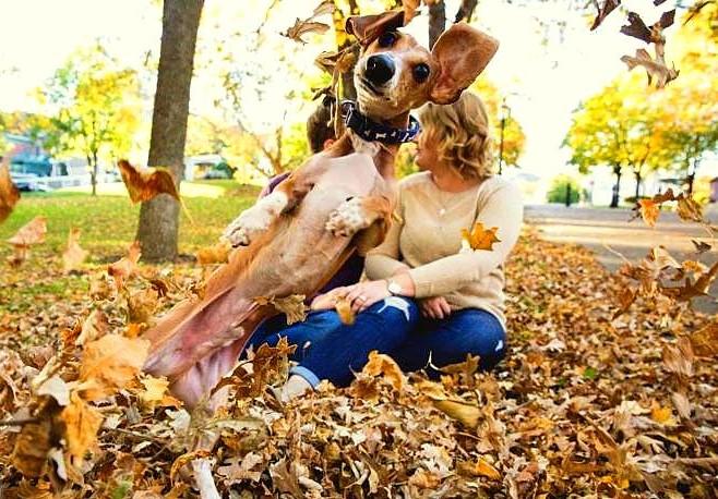 perro saltando en hojas
