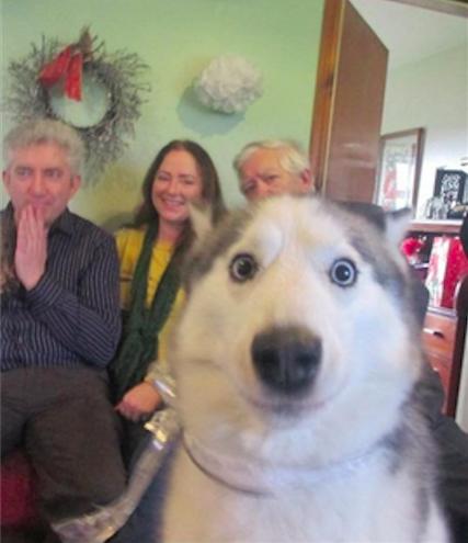 husky y amigos