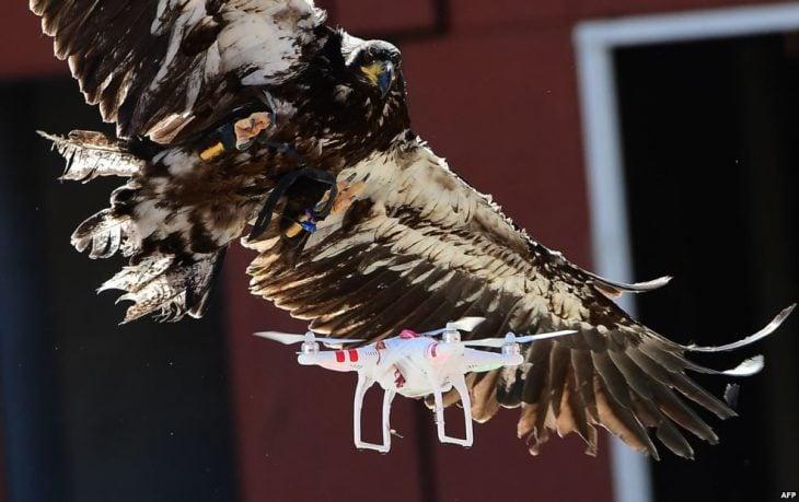Águila drone