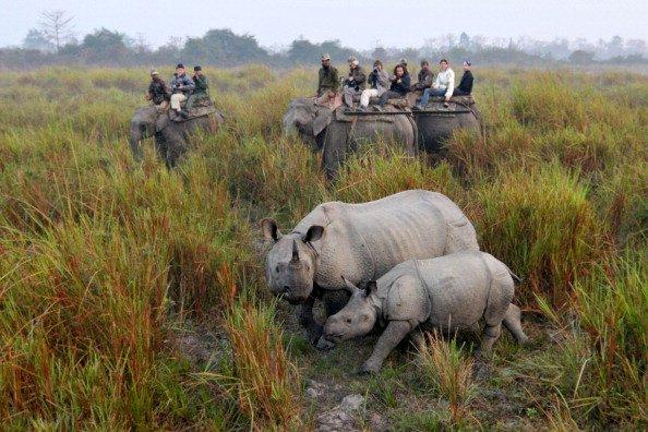 Viendo rinocerontes