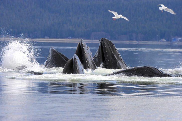 ballena jorobada reunión enigma