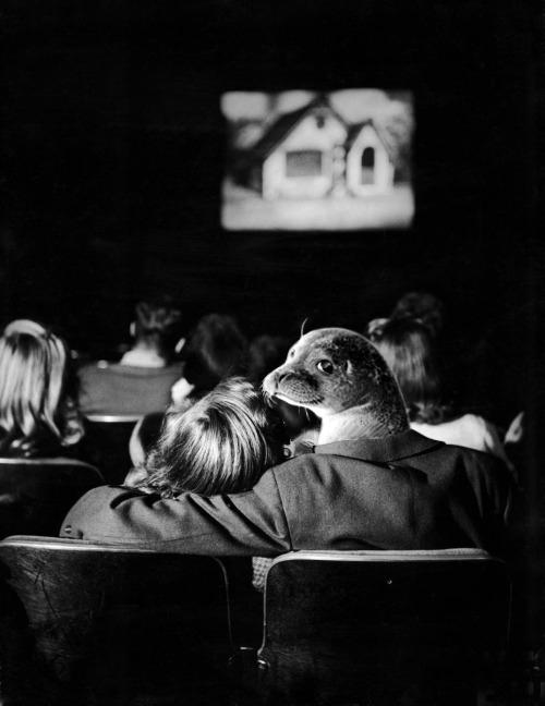 foca en cine