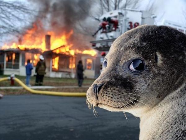 foca quema casa