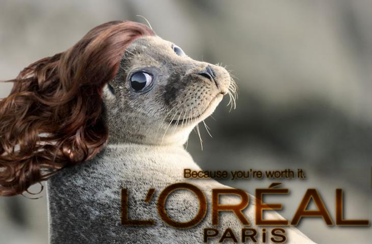 foca peloreal