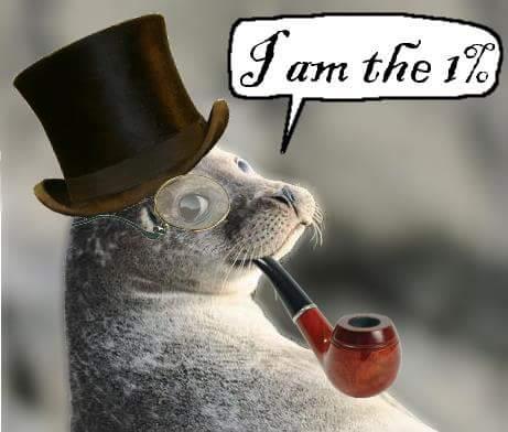 foca pipa