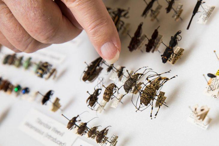 Insectos en colección