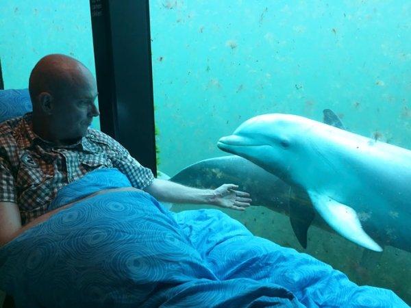 Enfermo con delfines