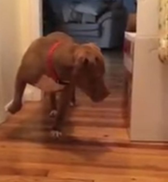 puntitas_perro