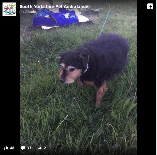 Perrito abandonado con nota triste