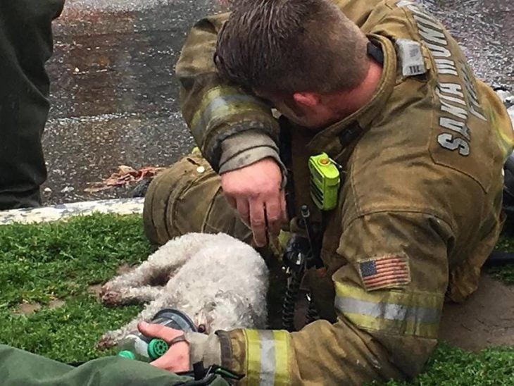 Bombero salva a perro