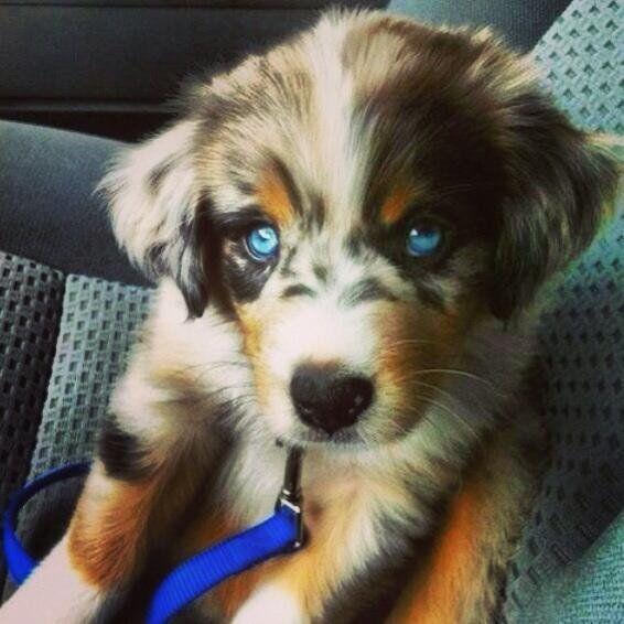 10 extrañas razas de perros