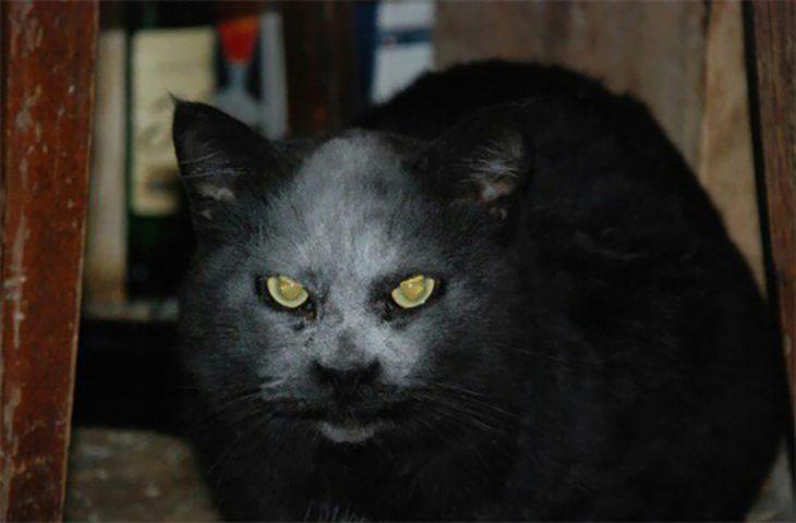 Gato con harina en la cara