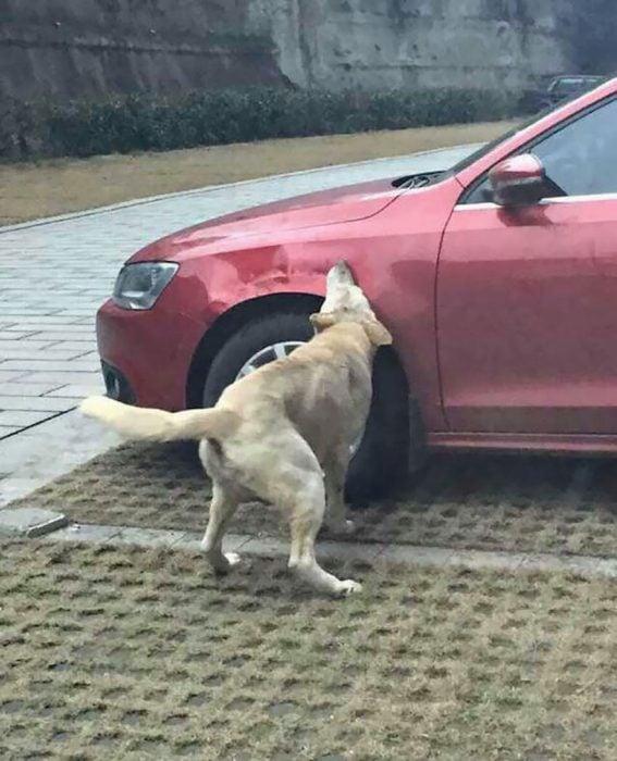 Perro se venga de humano