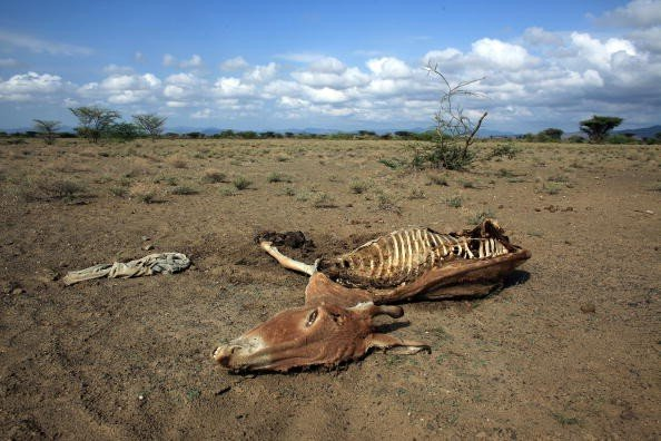 Burro esqueleto