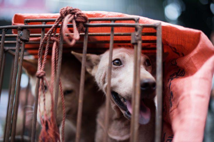 Taiwan prohíbe consumo de carne de perros y gatos