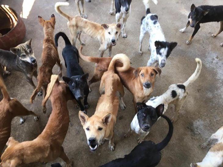 Baines rescata perros en Tailandia