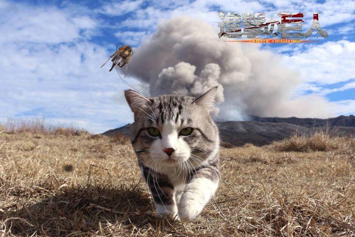 gato pelicula