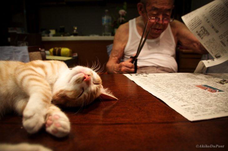 abuelo_gato