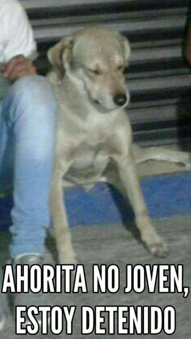 Memes Balu el perro delincuente de GDL