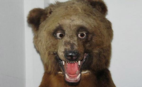 oso disecado
