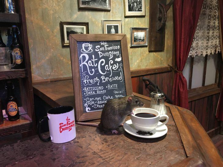 Café para ratas