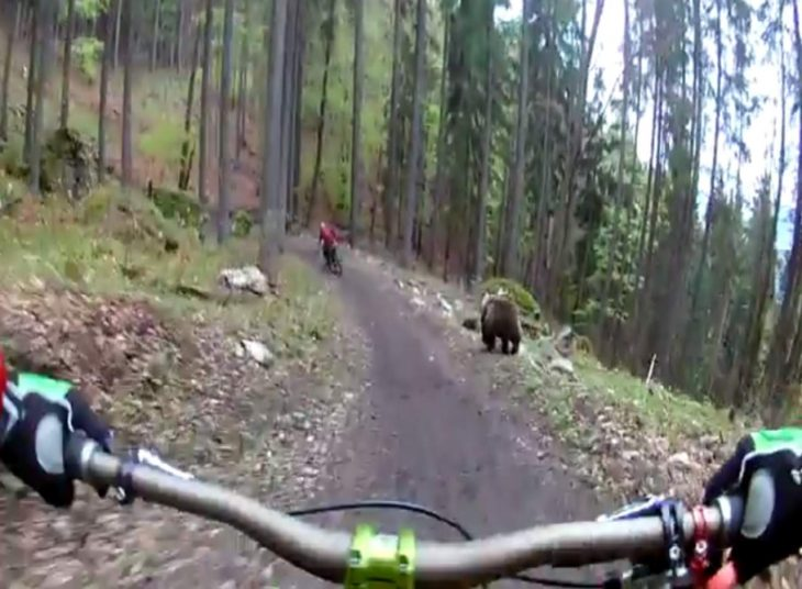 Ciclistas se encuentran con oso