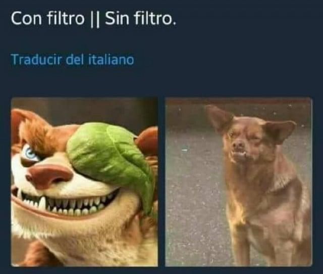 Memes del perro mas famoso de México: El chilaquil
