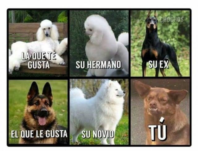 chilaquil meme