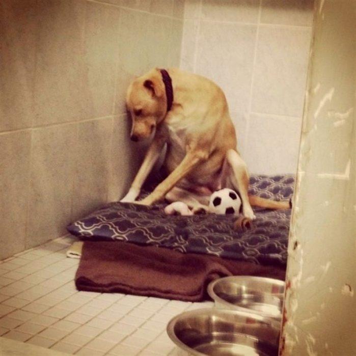 El perro más triste del mundo