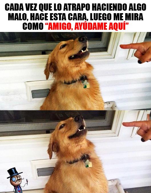 perro meme