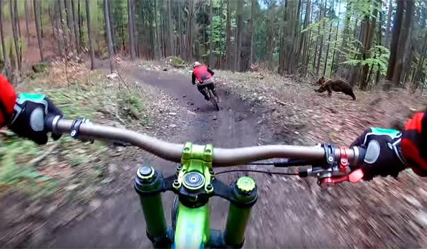 Oso sigue a ciclista