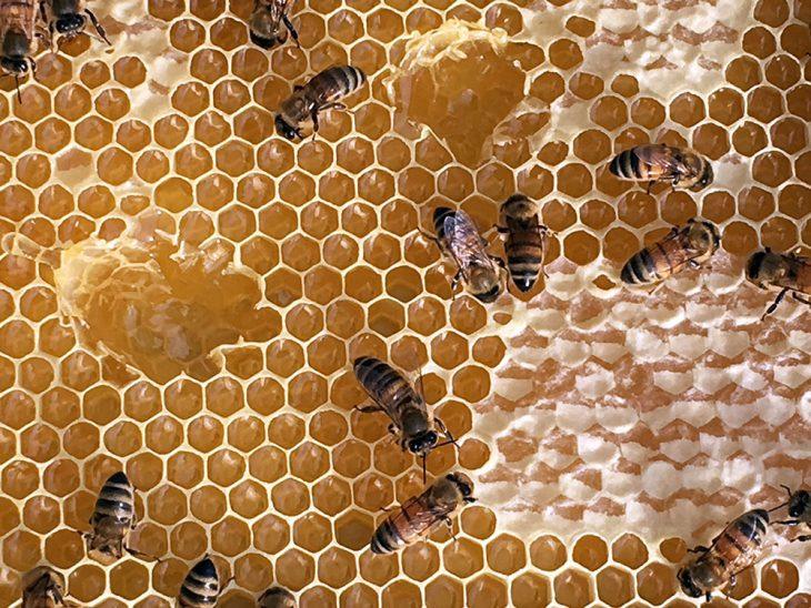 escafismo miel y abejas