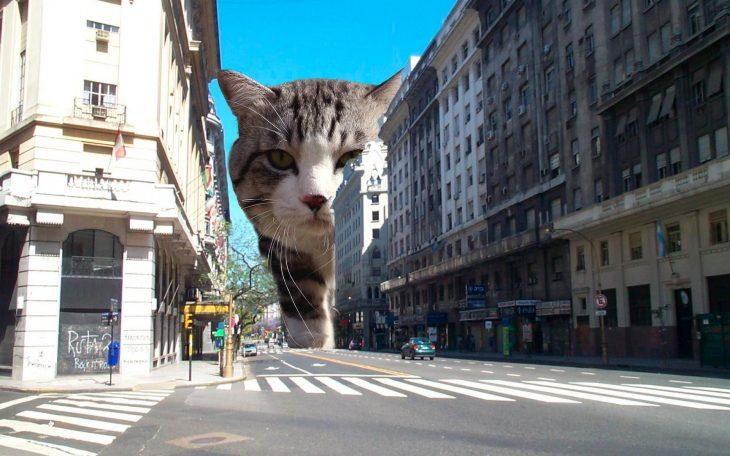 gato edificios
