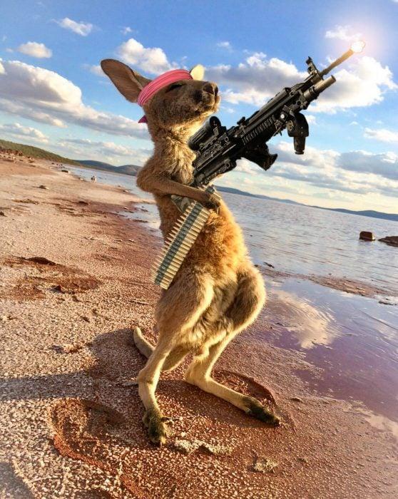 canguro rambo