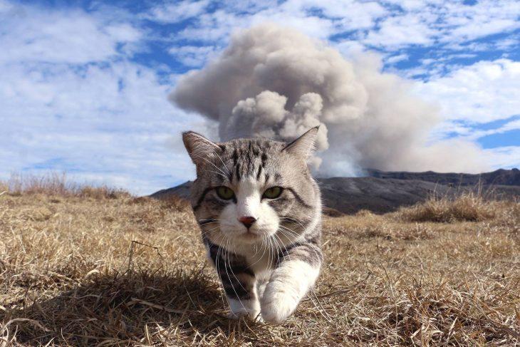 gato camara