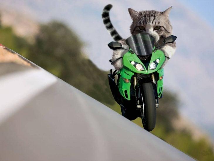 gato moto