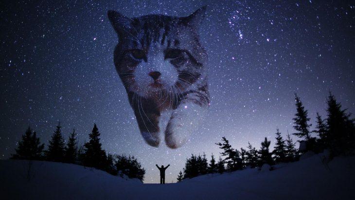 gato espacio