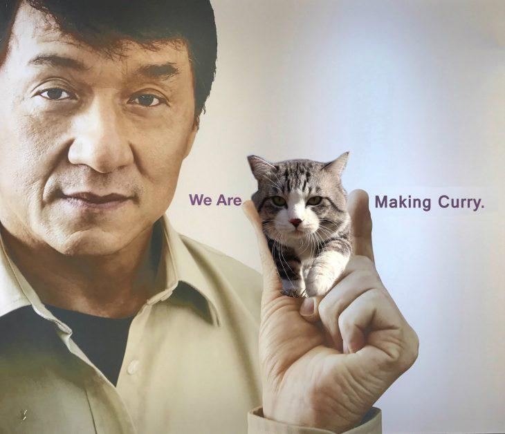 gato chan