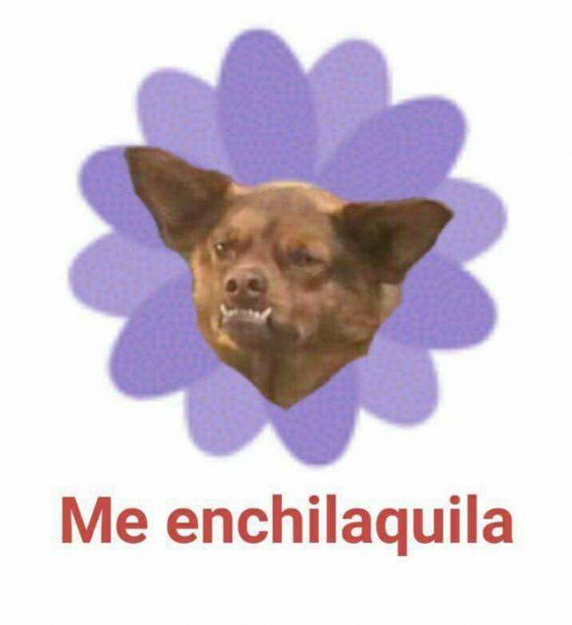 chilaquila