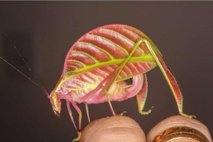 Especies recién descubiertas en 2017