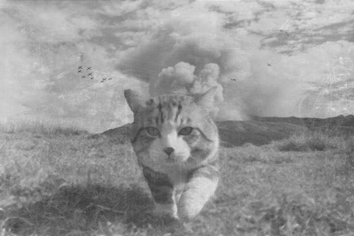 gato 2a guerra