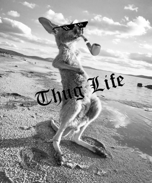 canguro thug